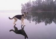 Câinele şi umbra sa